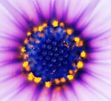 Purple Passion by Emma Hardcastle