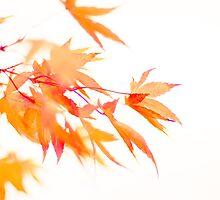...autumn high... by Geoffrey Dunn