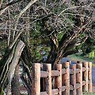 Don't Fence Me In - Hill End NSW Australia by Bev Woodman