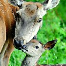 A mothers affection by Alan Mattison
