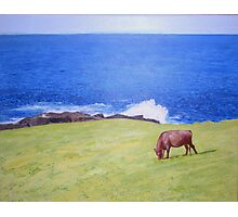 """""""The Cow, The Sea and Me"""" Photographic Print"""