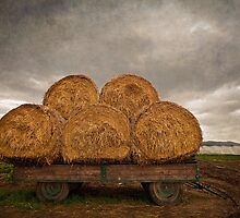 Hay Ride II by Boston Thek Imagery