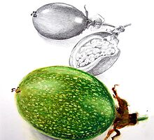 From the sketchbook - passion fruit by Susana Weber