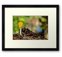 Yellow Cap Framed Print