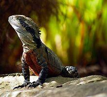 Lizard of Oz - Afternoon Sun by clydeessex