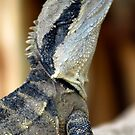 Lizard of Oz - Up Close and Personal by clydeessex