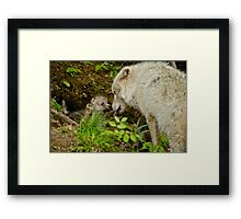 Arctic Wolf Pup Framed Print