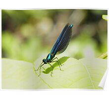 Baby Dragonfly Poster
