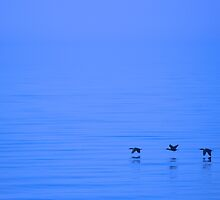 Cormorants Over Lake Ontario by Jessica Dzupina