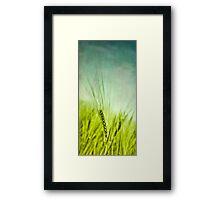 Grain Framed Print