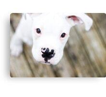 white boxer puppy Canvas Print
