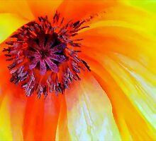 Celebrate the Poppy: Yellow by paintingsheep