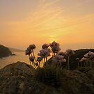 Cornwall: Sea Pinks in the Evening Light by Rob Parsons