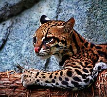 Ocelot Painted by Judy Vincent