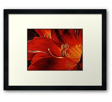 Blood-red Flowers Framed Print