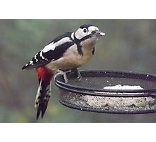 Great Spotted Woodpecker Eating Peanut Cake Photographic Print