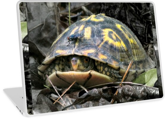 """""""Will you flit a little faster?"""" said the turtle to the fly. by Jean Gregory  Evans"""