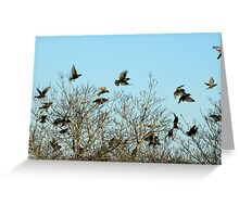 Last Dance At Roosting Time Greeting Card