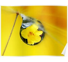 A lily drop in yellow Poster