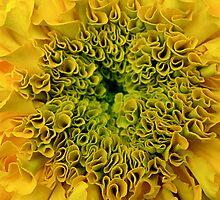 Marigold(en) by eleveneleven