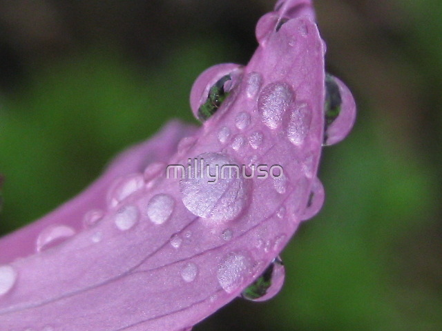pink rain petal by millymuso