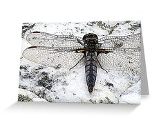 Return Of A Dragonfly Greeting Card