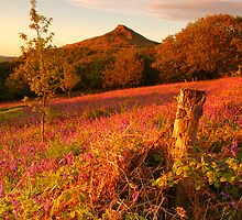 Bluebells and Roseberry Topping, Newton Wood, Great Ayton, North Yorkshire Moors by James Paul