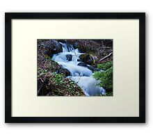 Forest Cascades Framed Print