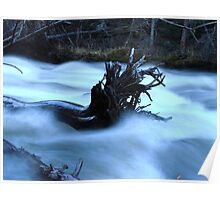 Fallen Tree in the River Poster