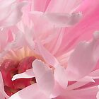 Peony Jewels by Maureen Bloesch