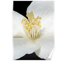 Centerpiece - Blossom 002 Poster