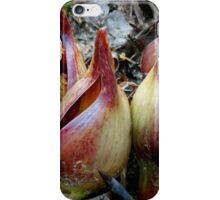 Skunk Cabbage - Spathe With Spadix  iPhone Case/Skin