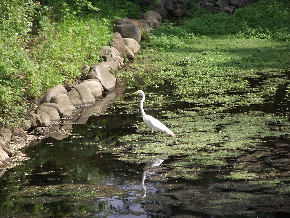 The Great Egret Cometh by Sinclere