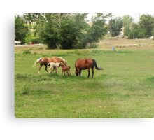Two new colts as of today....the brown one came in the middle of the night. Metal Print