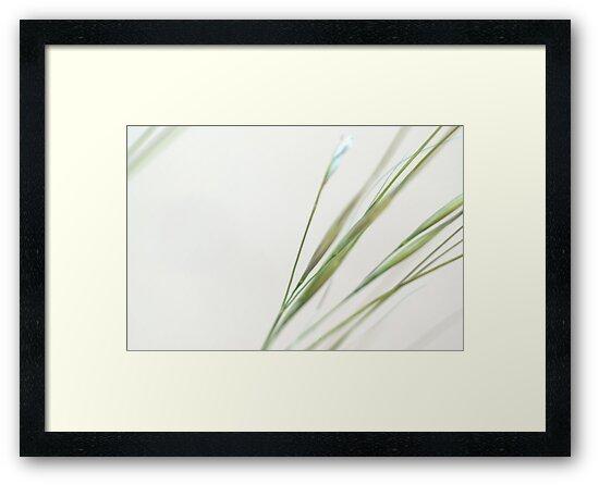 Desert Grass by Brian Hendricks