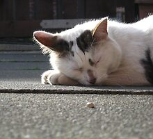 Lazing on a summers afternoon by Ladymoose