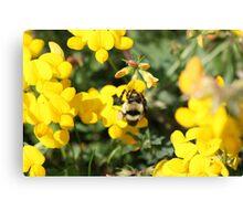 Seeking the Sweetest Nectar Canvas Print