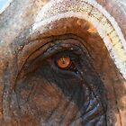 The elephants eye by Alan Gillam