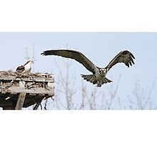 Fly the Nest Photographic Print