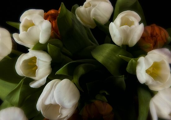 Tulips Bouquet by Dania Reichmuth