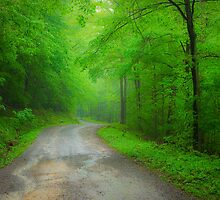 The Road to Dolly Sods by LeeAnne Emrick