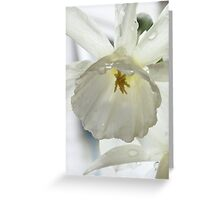 Daffodil in the rain Greeting Card