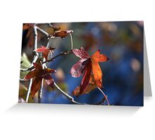 Colour And Light Greeting Card