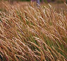 Long Grass by Paul Finnegan