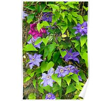 Climbing Flower and Vine Poster