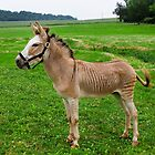 ZONKEY by Mark Van Scyoc
