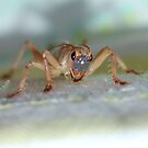Cricket by Michelle *