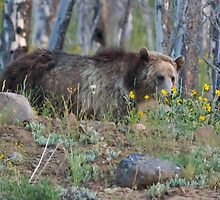 Grizzly Smelling The Flowers    #2062 by JL Woody Wooden