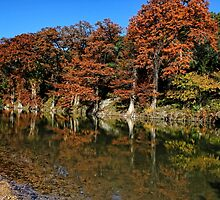Guadalupe River State Park by Judy Vincent
