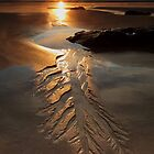 beachfern..... by David Murphy